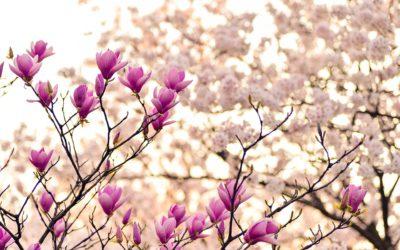 Tips tegen voorjaarsmoeheid